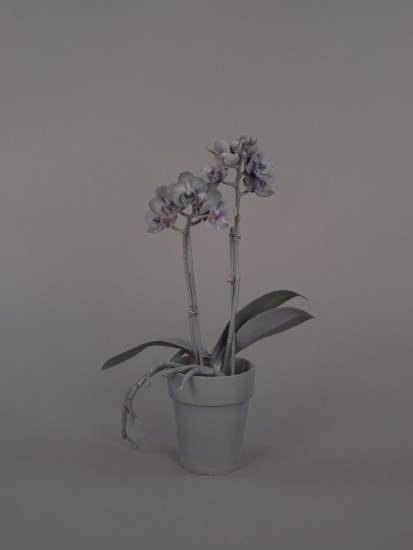 Syjuco: Neutral Orchids (Phalaenopsis, small): Photograph